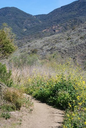 Malibu Country Inn: Hiking in Zuma Canyon, across the PCH from hotel.