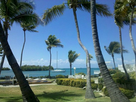 Lajas, Puerto Rico: view from patio room 102