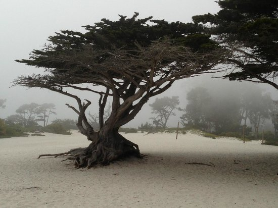 Portola Hotel & Spa at Monterey Bay: Carmel Beach