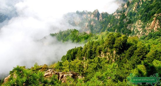 Wuling Bamboo Forest