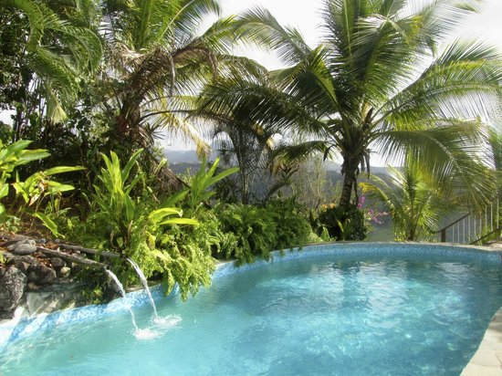 Nature's Paradise: A pool with a view