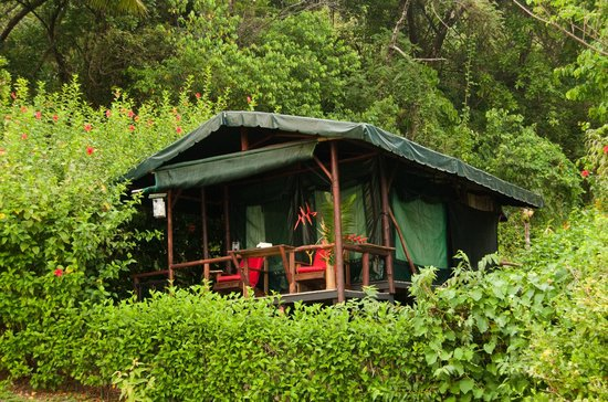 La Leona eco Lodge: Experience the Rainforest in our Safari Tents.