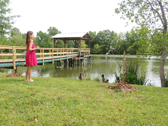 Country Charm Bed and Breakfast: Lia and the ducks in front of the pond