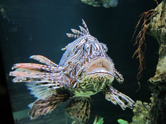 Photos of Sharjah Aquarium, Sharjah