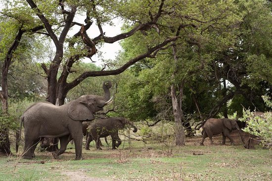 Zambezi National Park attractions