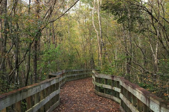 Adel, GA: Hiking Trail 1