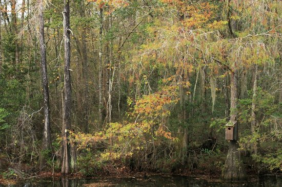 Adel, GA: Woodduck House 1