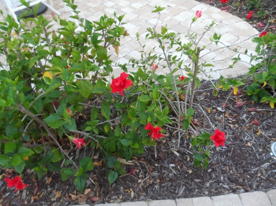Sea Spray Resort on Siesta Key: Flowers outside the door of unit #3