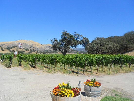 Santa Ynez Valley Marriott : Santa Ynez wineyards