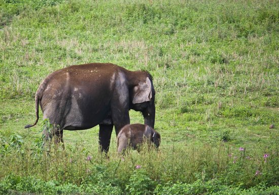 Nature-Hunt Eco Camp Kaziranga: Cutest Baby Elephant @ Kaziranga
