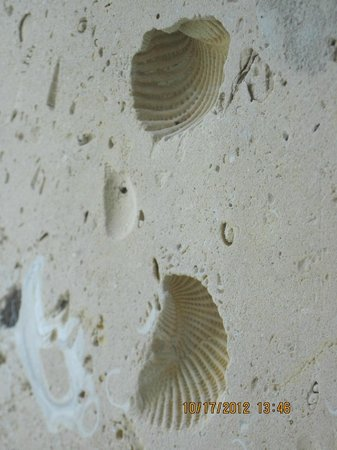 La Porte, TX: Traces of real seashells which imprinted themselves into the limestone