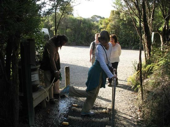 Waipoua Forest, Nueva Zelanda: washing shoes before entering