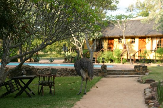 Thornhill Safari Lodge
