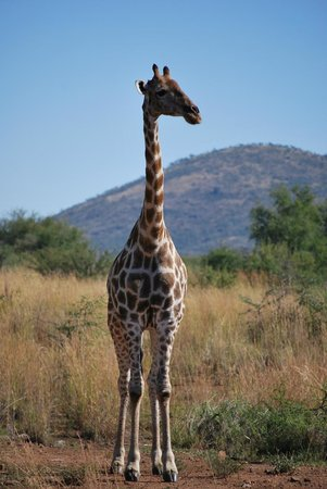 Hatfield, South Africa: Reserva Pilanesberg