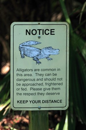 Micanopy, FL: Danger: Gators are afoot