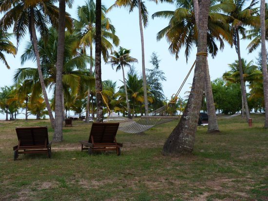 Marari Beach Resort: Cocoteraie