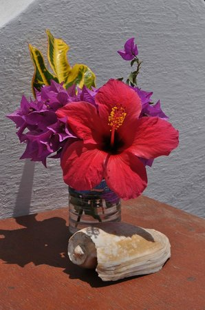Brufut, Gambia: Fresh flowers by our sun loungers every morning