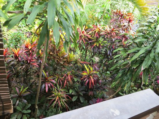 Tiing Gading Bungalows: Beautiful gardens just below my balcony