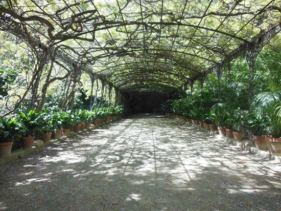 Wisteria arbour picture of la concepcion jardin for Jardin botanico concepcion