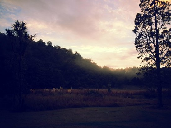 Waipoua Forest, Nueva Zelanda: Morning at the campground
