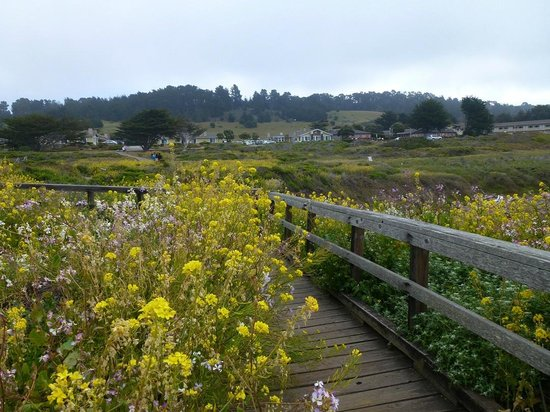 BEST WESTERN PLUS Fireside Inn on Moonstone Beach: Wild flowers along the boardwalk
