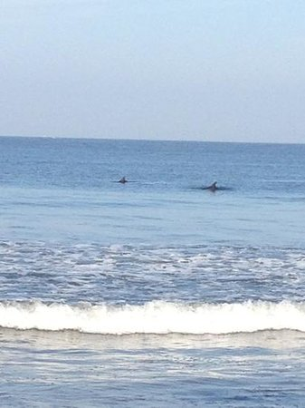 Marival Residences & World Spa: dolphins at beach club