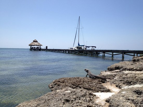 Xanadu Island Resort Belize: Iguana and pier