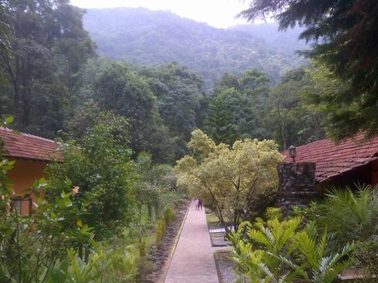 Blue Ginger Wayanad Resorts: path way to chembra
