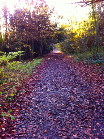 Farnborough, UK: Trail