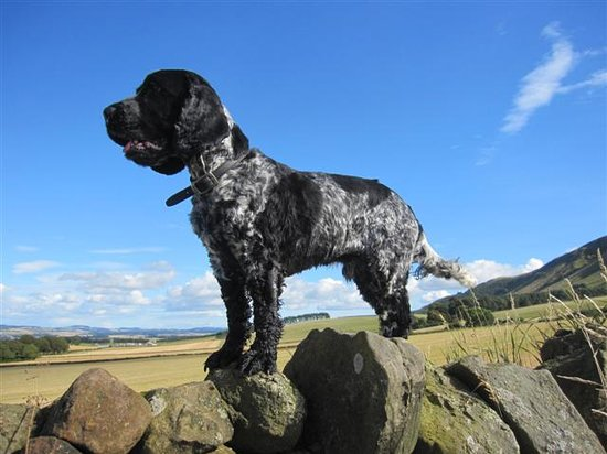 Dalqueich Farmhouse: Bertie in his noble pose!