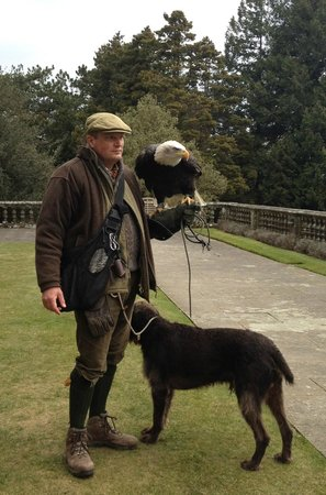 Bovey Castle Hotel: Daily Bird of Prey show