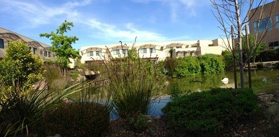 DoubleTree by Hilton Hotel & Spa Napa Valley - American Canyon: Lagoon