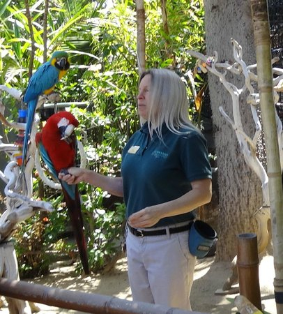 Catamaran Resort Hotel: Tropical bird show on grounds