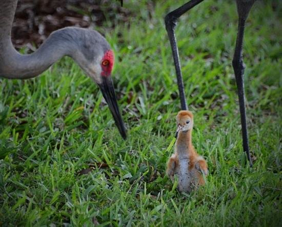 Holiday Inn Club Vacations Orlando - Orange Lake Resort: Baby Crane