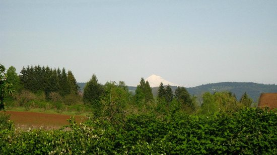 Dundee, OR: Mt. Hood to the East