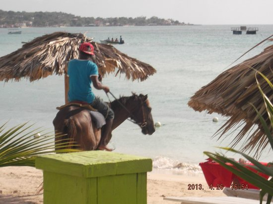 Fun Holiday Beach Resort: HORSES