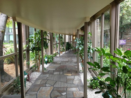 Flamingo Conference Resort & Spa: hallway - pretty with flowers and plants