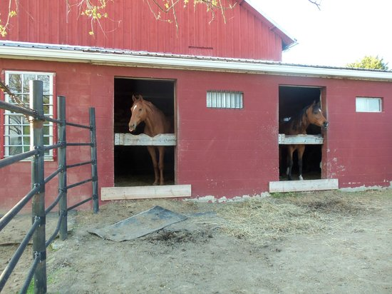Hummelstown, : Horses at the barn