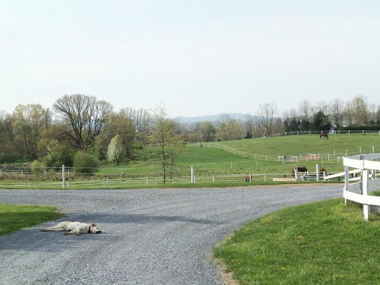 Hummelstown, : View from the barn