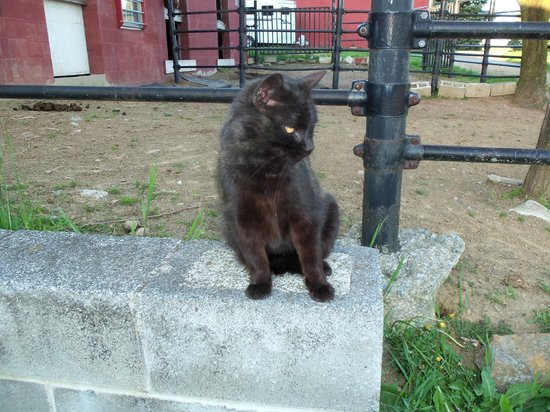 Hummelstown, : One of the friendly barn cats