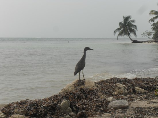 "Balamku Inn on the Beach: a ""heron"" in the morning"