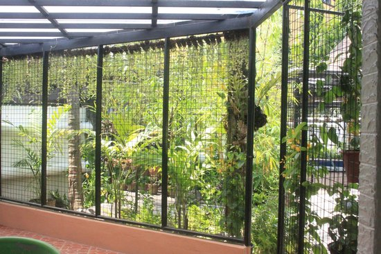 Lush hanging greens provide privacy screens to pool lanai for Privacy pool screen