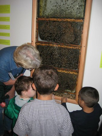 Santa Paula, CA: Visit our real live beehive!!