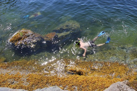 Powell River, Canada: Snorkelling in the warm waters of Desolation Sound BC