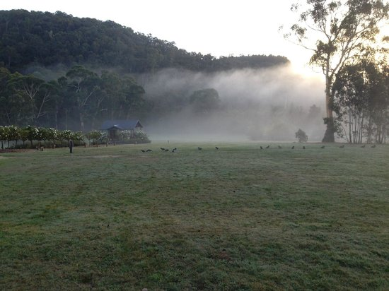 Yering Gorge Cottages: Morning fog