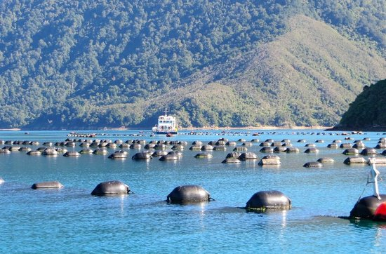 Havelock, New Zealand: Mussel Farm