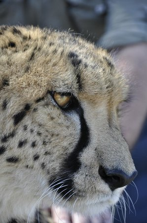 Inverdoorn Game Reserve: I am keeping an eye on you :-)