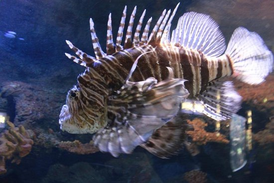 Scary fish - Picture of Sea Life Helsinki, Helsinki - TripAdvisor