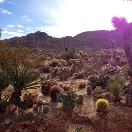 Joshua Tree, Californie : View from the fire pit