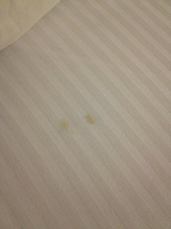 North Stonington, CT: Yellow stains on the fitted sheets at Cedar Park Inn and Suites
